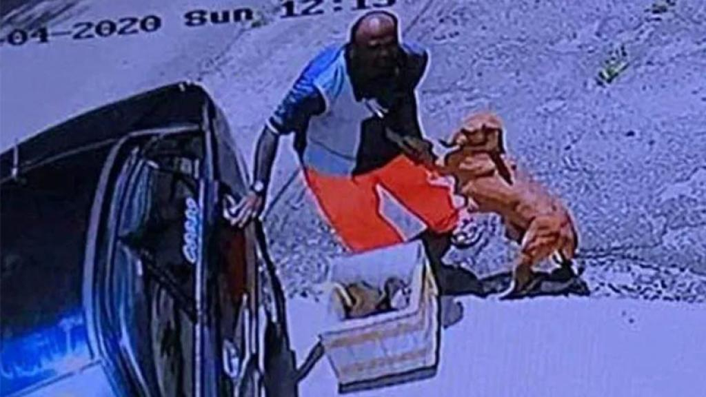 Video Viral Perrita Suplica Ayuda